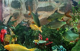 Tropical Fish Home Decor Interior Exquisite Picture Of Rectangular Fresh Water Green Plant