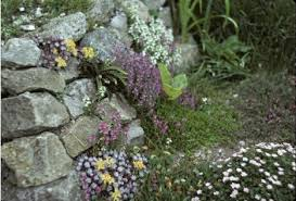 Rock Garden Plants Uk Herbaceous Perennial Garden Pictures Page 2 Rock Garden