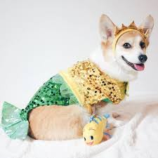 Funny Halloween Animal Costumes 25 Dogs Costumes Ideas Puppies