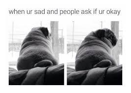 Sad Pug Meme - sad