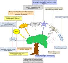 High Heat Plants Frontiers Abiotic Stress Responses And Microbe Mediated
