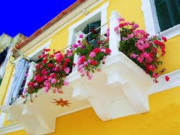 geranien balkon balkon pflanzen und blumen blütenpracht und sichtschutz