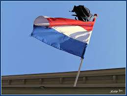 Flag Of Netherlands From Argentina To The Netherlands For Love Spotted In The