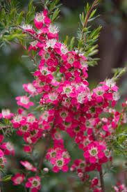 what plants are native to australia attracting butterflies to your garden native plant and