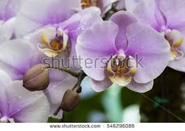 yellow orchid flower nature fresh nature stock photo 546296086