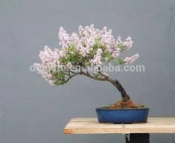 buy cheap china high quality artificial tree products find china