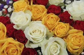 different color roses color meanings that ll help you express the right feelings