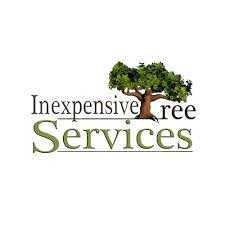 9 best glendale tree service professionals expertise