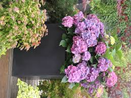 pots in gardens ideas flowers for garden pots home outdoor decoration