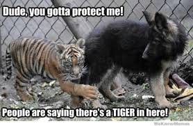 Tiger Meme - tiger meme weknowmemes