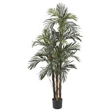 5 foot robellini palm tree potted robellini palm silk tree and palm