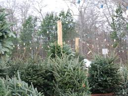 christmas tree prices get great prices on christmas trees in alpharetta alpharetta ga patch