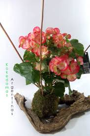 475 best kokedama images on pinterest string garden gardening