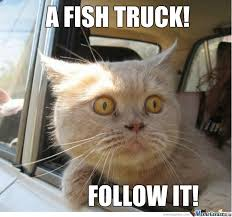 Funny Fish Memes - a fish truck by nightbreed meme center