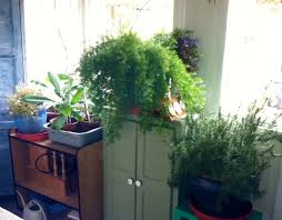 mesmerizing indoor plants home fresh and healthy garden with