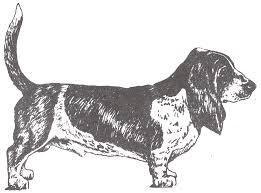 basset hound page