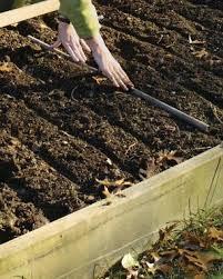 grow your own garlic fine gardening