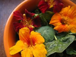 nasturtium flower nasturtiums the beautiful nutritious and easy to grow edible