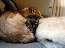 Cats In Dog Beds 29 Cute Cats Who Use Dogs As Pillows