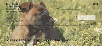 belgian sheepdog pups belgian sheepdog puppies checks belgian sheepdog puppies personal