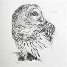 367 best owl sketches images on pinterest owl sketch owls and