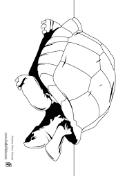 reptile coloring pages 54 free reptiles coloring pages u0026 online