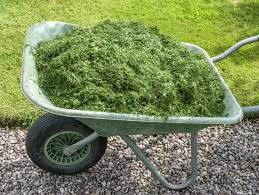 grass clipping garden mulch u2013 using fresh or dried grass clippings