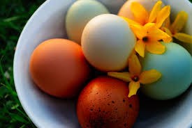 three ways to dye eggs my pet chicken blog
