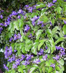 native plant sales fairchild tropical botanic garden u003e home gardening u003e creating a
