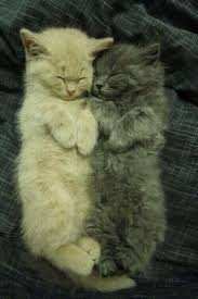 77 best cats images on pinterest animals cats and adorable animals