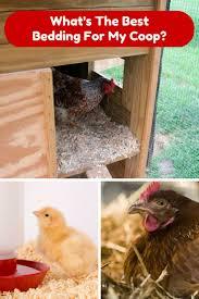 20 best chicken coops u0026 shelters images on pinterest chicken