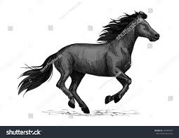 black mustang horse black horse runs gallop sketch galloping stock vector 554384932