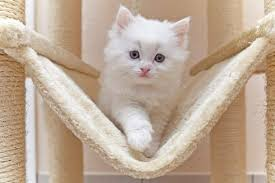 best cat tree for large cats you ll these 6 affordable