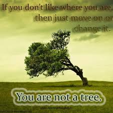 you are not a tree healthythoughts the mind is everything