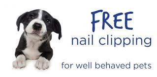 free nail clipping vetwest animal hospitals