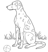 dalmatian dog coloring free printable coloring pages