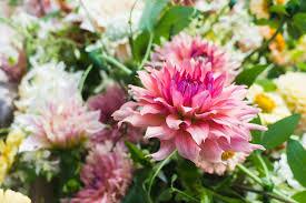 Peach Flowers 100 Flowering Peach 4041 Best Plants U0026 Flowers Images
