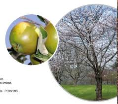 coupon save 8 on any fruit tree at home depot coupons canada