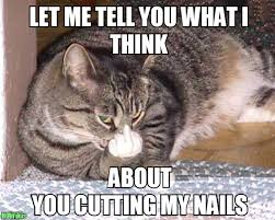 Nails Meme - trim your cat s nails visihow