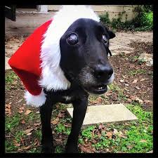 Dogs Helping Blind People Blind Sick Elderly Dog Spends His First Christmas In A Loving