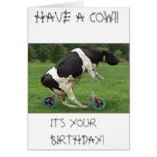 cow greeting cards happy birthday with cow gifts on zazzle