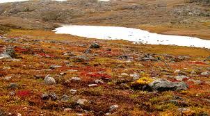 tundra file nunavut tundra a jpg wikimedia commons