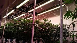 Led Grow Lights Cannabis Led Grow Lights For Professional Cannabis Growers Bios Lighting