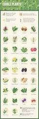 plants native to pennsylvania urban foraging the ultimate in local eating fix com