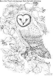 pleasant design ideas intricate colouring pages 2 free owl