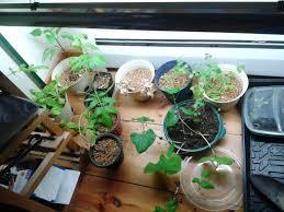 kitchen herb garden kit easy indoor herb garden kit ideas u2013 come