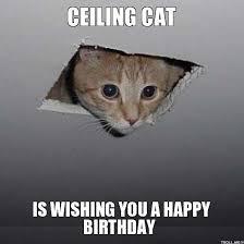 Happy Birthday Cat Memes - 20 adorbs happy birthday cat memes sayingimages com