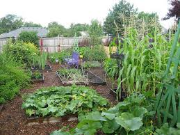 Vegetable Garden Layouts by Gorgeous Large Backyard Vegetable Garden Ideas