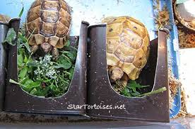 food u0026 water dishes for small tortoises