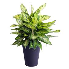 indoor house plants low house plants indoor plants the home depot